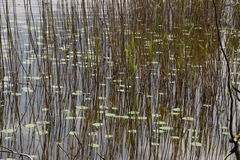 Lake Scenery stock image