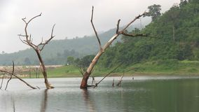 Lake scenery with old tree. At the front stock footage