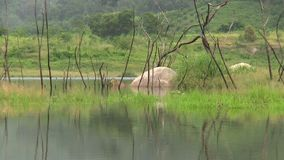 Lake scenery. With rock and grass stock video footage
