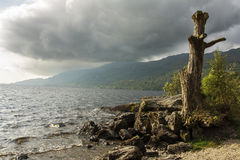 Lake in Scotland. With a dead tree on the shore Royalty Free Stock Image