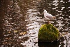 Lake seagull Stock Photos