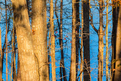 Lake seen from behind trees Royalty Free Stock Photos