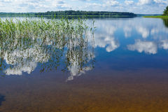 Lake Seliger. Stock Photo