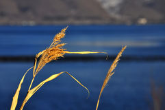 Lake Sevan stock photo