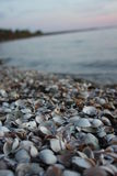Lake Shells. These shells are at Lake Fork in East Texas. I just happen onto them while shooting the sunset Royalty Free Stock Image