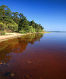 Lake shore Royalty Free Stock Photos