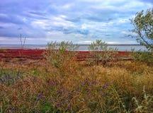 Lake shore Stock Photo