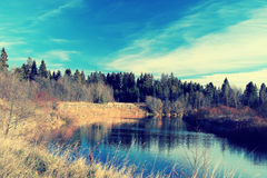 lake shore with forest Stock Photography