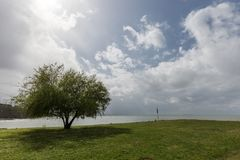 Lake shore, with intense green grass and tree, beneath a deep sk Royalty Free Stock Images