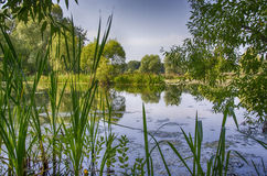 The lake shore. Shore of the lake in the Park Stock Photography