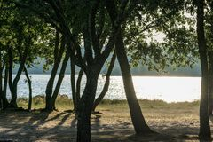 Lake shore at sunset with trees. In summer stock photos