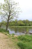 Lake shore. Tree and rocks along lake shore Royalty Free Stock Photography