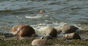Lake Shore waves breaking. On large boulders stock footage