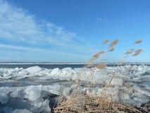Lake shore in winter Stock Photos