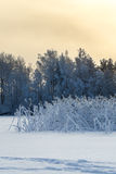 Lake shore at winter season with reed in frost, sunset Royalty Free Stock Photos