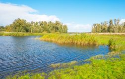Lake shoreline with reed below a blue cloudy sky in autumn. Lake shoreline with reed below a blue cloudy sky at fall Stock Photography