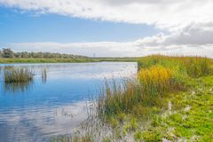 Lake shoreline with reed below a blue cloudy sky in autumn. Lake shoreline with reed below a blue cloudy sky at fall Royalty Free Stock Photo