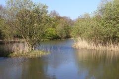 Lake at Shorne Park Royalty Free Stock Photo