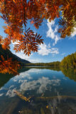 Lake in Siberia with orange leaves and hills. Orange leaves of a tree with lake and blue sky royalty free stock photos