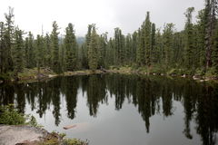 Lake in the Siberian taiga. This forest lake has the name `bear` and it is located in the natural Park `Ergaki` in the midst of the mountain range of the Western Royalty Free Stock Photos