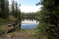 Lake in the Siberian taiga. This forest lake has the name `bear` and it is located in the natural Park `Ergaki` in the midst of the mountain range of the Western Stock Image