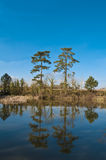 Lake Side in Early Spring. At the side of a lake in early sping, two pines reflected in the water Stock Images