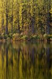Lake Side Reflections. Sunlit trees reflecting in a beautiful Pennsylvania lake stock images