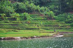 Lake side terraces. Lake beside the Sea Lake terraces, a tourist destination in the province of Gia Lai, Viet Nam royalty free stock photos