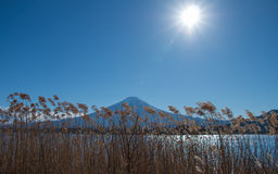 Lake side view of Mountain Fuji, Japan Royalty Free Stock Photography