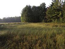 Lake-side Wetland. Early in the morning at sedge meadow wetland next to a northwoods lake Royalty Free Stock Images