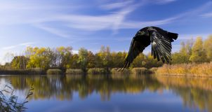 Lake with silhouette of a flying bird - Bedfont Lake Country Park, London Royalty Free Stock Photography