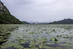 Lake Skadar Royalty Free Stock Photo