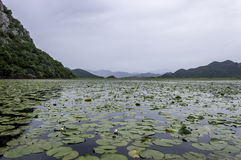 Lake Skadar Royalty Free Stock Photo