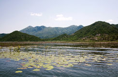 Lake Skadar, a national Park of Montenegro. The surface of the lake with the leaves of water lilies on a background of green hills stock photos
