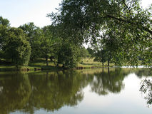 Lake. Sky, grass and trees, is reflected in a lake Royalty Free Stock Photo