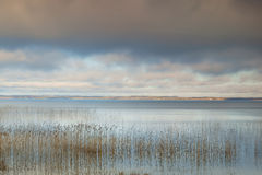 Lake and sky. Reeds shore of the lake and the sky Royalty Free Stock Image