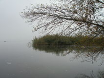 Lake with smooth water surrounded by marsh grass. With trees and fog Royalty Free Stock Photo
