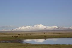 Lake Son-Kul, Kyrgyzstan. Horses grazing Stock Image