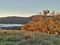 Lake sonoma fog. Hillside sunrise lake sonoma, rockpile ridge Royalty Free Stock Photos