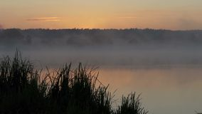 A lake at a splendid sunset in summer. It is covered with fog. stock video