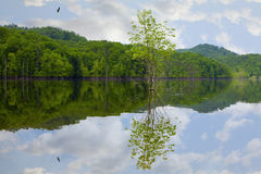 Lake in spring Stock Photography