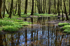 Lake in spring forest Stock Photos