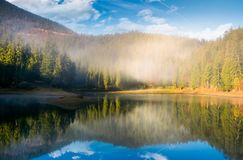 Lake in spruce forest at foggy sunrise. Gorgeous autumn landscape in Carpathian mountains Royalty Free Stock Image
