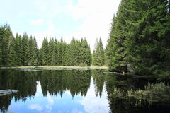 Lake with spruce trees Royalty Free Stock Photos