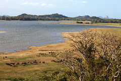 Lake in Sri Lanka Stock Photography