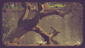 Lake in St.James`s park, London Royalty Free Stock Photo