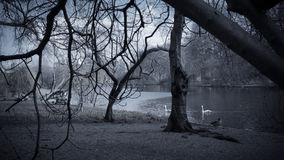 Lake in St. James`s park royalty free stock photo