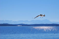 Lake Starnberger See In Bavaria Royalty Free Stock Images