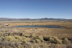 Lake at steppe, Utah Stock Images