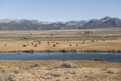 Lake at steppe, Utah Stock Image